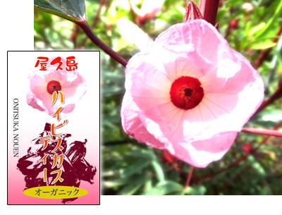 rosel
